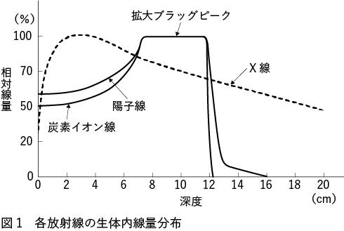 図1 各放射線の生体内線量分布