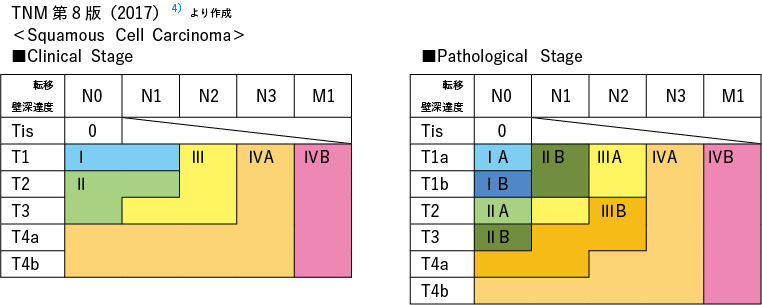 TNM 第8 版(2017)<Squamous Cell Carcinoma>