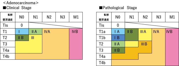 TNM 第8 版(2017)<Adenocarcinoma>
